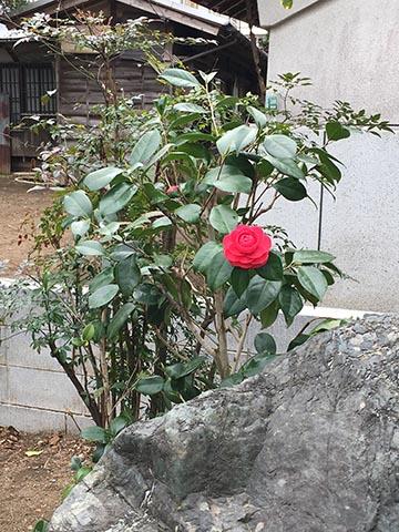 名もない花