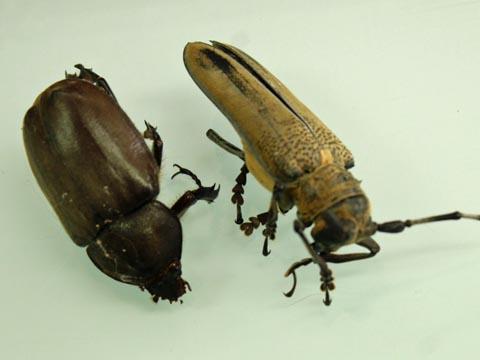熱中症の昆虫